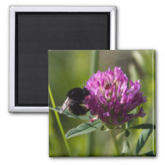 bumblebee on clover 2 inch square magnet