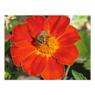 Bumblebee on Flower Photo Print