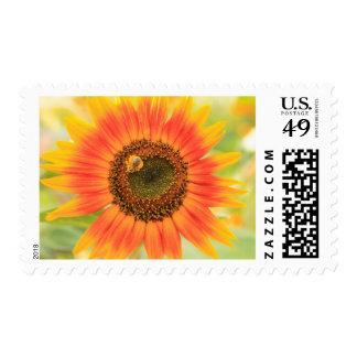 Bumblebee on sunflower, Community Garden Postage Stamp