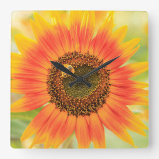 Bumblebee on sunflower, Community Garden Square Wall Clock