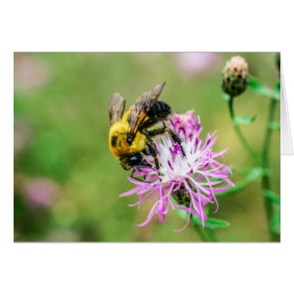 Bumblebee on Thistle Greeting Card