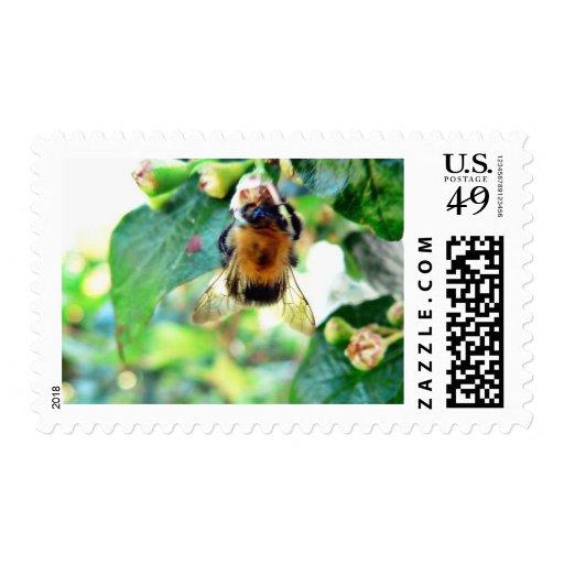 Bumblebee On Tree Postage Stamps