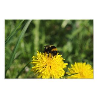 Bumblebee Photo Enlargement