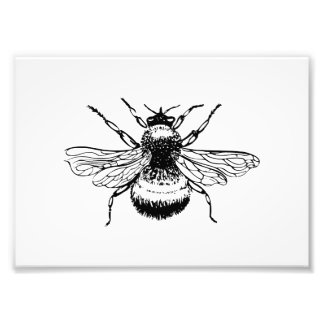 Bumblebee Photo Print