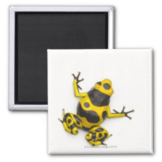 Bumblebee Poison Dart Frog Magnet