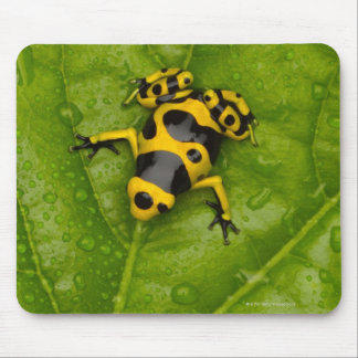 Bumblebee Poison Dart Frog Mouse Pad