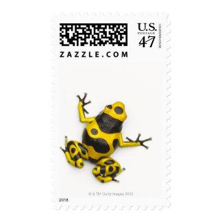 Bumblebee Poison Dart Frog Postage