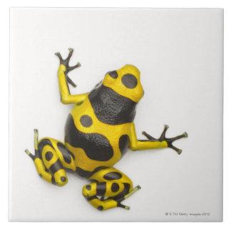 Bumblebee Poison Dart Frog Tile