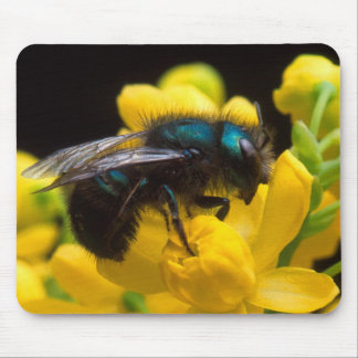 Bumblebee Pollinating Mouse Pads