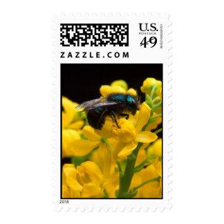 Bumblebee Pollinating Postage