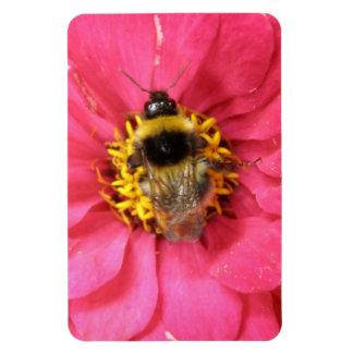 Bumblebee Premium Magnet