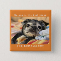Bumblesnot button: Rescue is the best breed! Pinback Button