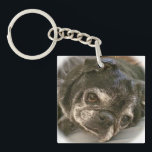 "Bumblesnot keychain: Puggy please? Keychain<br><div class=""desc"">This double-sided keychain has Bumble&#39;s adorable mug on one side and &quot;Adopt! Don&#39;t Shop! Puggy please?&quot; on the other.  All proceeds donated to pet rescue.</div>"