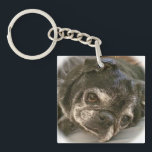 """Bumblesnot keychain: Puggy please? Keychain<br><div class=""""desc"""">This double-sided keychain has Bumble&#39;s adorable mug on one side and &quot;Adopt! Don&#39;t Shop! Puggy please?&quot; on the other.  All proceeds donated to pet rescue.</div>"""