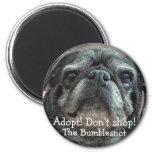 Bumblesnot magnet: Adopt! Don't shop!