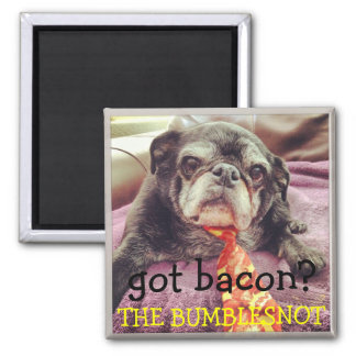 Bumblesnot magnet:  got bacon? magnet