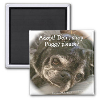 Bumblesnot magnet: Puggy Please? 2 Inch Square Magnet