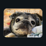 "Bumblesnot magnet: snort snort magnet<br><div class=""desc"">Put this Bumblesnot magnet on your fridge,  locker,  car or anyplace where he can hang out!  All proceeds donated to pet rescue.</div>"