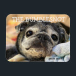 """Bumblesnot magnet: snort snort magnet<br><div class=""""desc"""">Put this Bumblesnot magnet on your fridge,  locker,  car or anyplace where he can hang out!  All proceeds donated to pet rescue.</div>"""