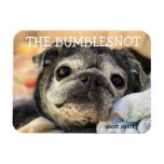 Bumblesnot magnet: snort snort magnet<br><div class='desc'>Put this Bumblesnot magnet on your fridge,  locker,  car or anyplace where he can hang out!  All proceeds donated to pet rescue.</div>