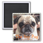 Bumblesnot magnet: The Itsy Pug 2 Inch Square Magnet