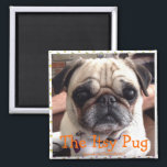"""Bumblesnot magnet: The Itsy Pug Magnet<br><div class=""""desc"""">Look into those deep,  dark eyes.  Who can resist her charms?  Stick her magnet on the fridge so she can beg for food every time you open the door.  All proceeds donated to pet rescue.</div>"""