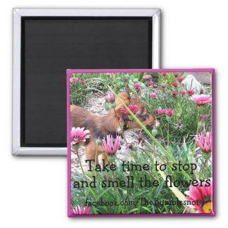 Bumblesnot magnet: The Wee One/Smell the flowers 2 Inch Square Magnet