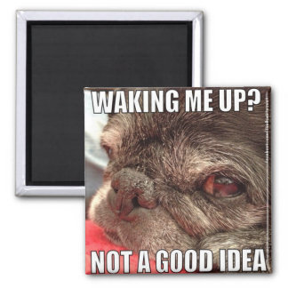 Bumblesnot magnet: Waking me Up? 2 Inch Square Magnet