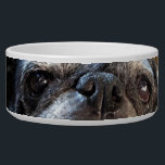 "Bumblesnot Pet Food Bowl<br><div class=""desc"">Bumble always has his eyes on the food!  If your pet won&#39;t eat his,  then Bumble will!  All proceeds donated to Pug rescue organizations.</div>"