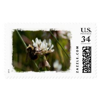 Bumbling in the Clover; No Text Postage Stamps