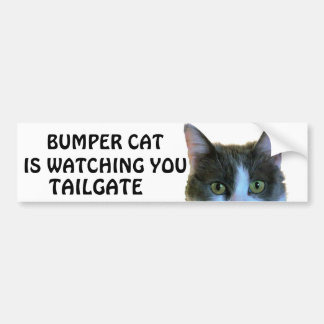 Bumper Cat is watching TAILGATE 28 Bumper Sticker