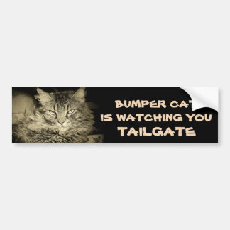 Bumper Cat is watching TAILGATE 34 Shades of Gray Bumper Sticker