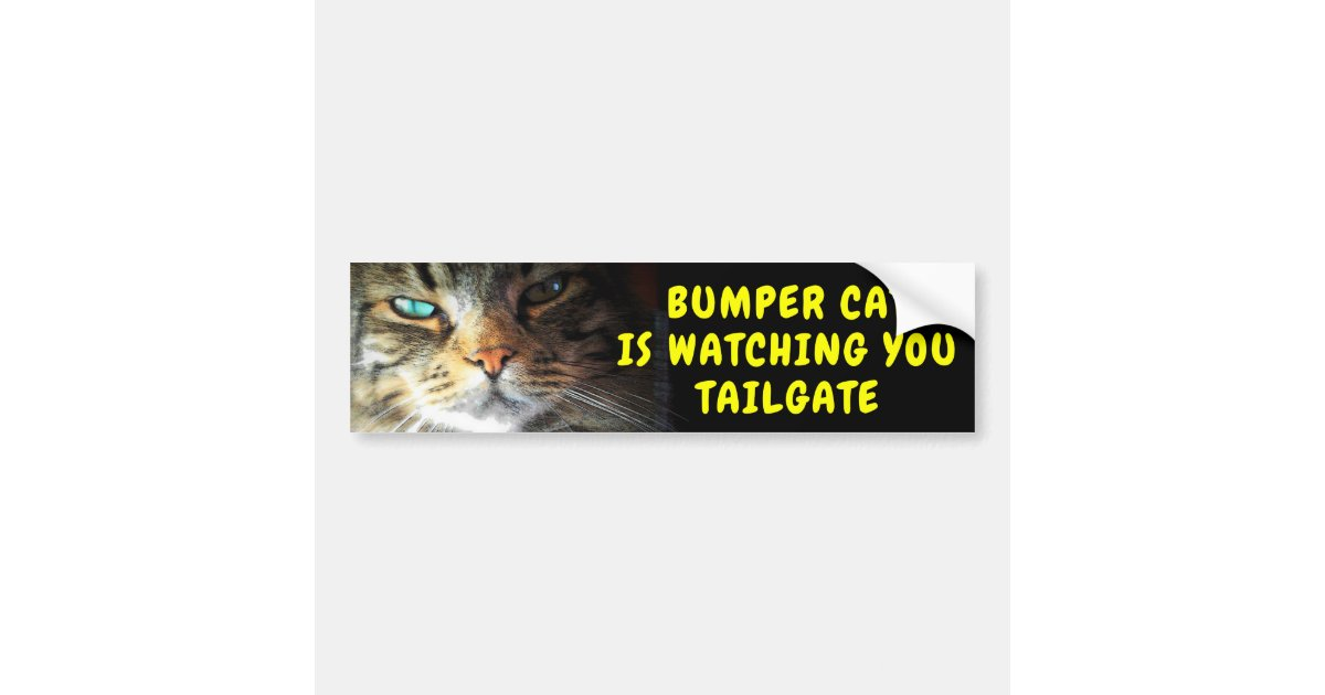 bumper cat is watching tailgate 42 chewy font bumper sticker zazzlecom