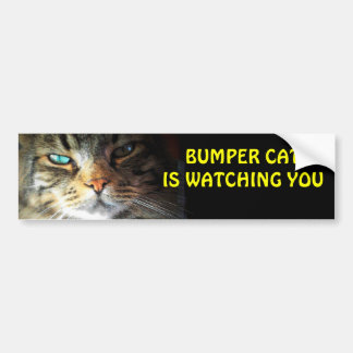 Bumper Cat is watching you 4 Car Bumper Sticker