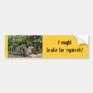 Bumper Sticker about Squirrels