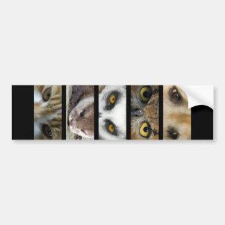 Bumper Sticker - Animals Eyes