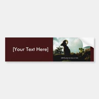 Bumper Sticker / Arizona Bighorn Sheep
