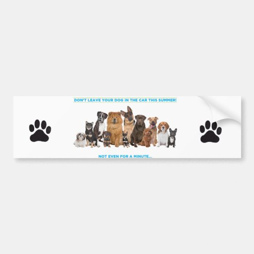 Bumper sticker..Don't leave your pet in a car, not Car Bumper Sticker