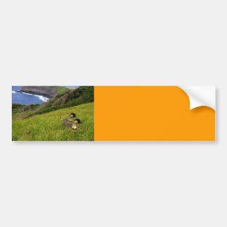 Bumper Sticker / Endangered Hawaiian Nene Geese