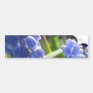 Bumper Sticker - Grape Hyacinth Car Bumper Sticker