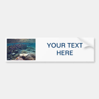 Bumper Sticker - Powder Blue Surgeon Fish Car Bumper Sticker