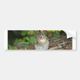 bumper sticker with photo of chipmunk