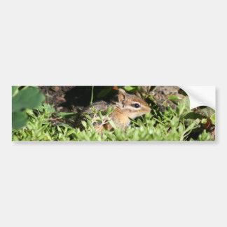 bumper sticker with photo of cute chipmunk