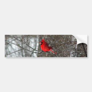 bumper sticker with photo of male cardinal car bumper sticker
