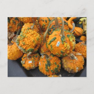 Bumpy Pumpkins Postcard
