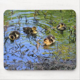 Bunch Of Baby Ducks Mouse Pad