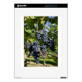 Bunch of blue grapes skins for the iPad