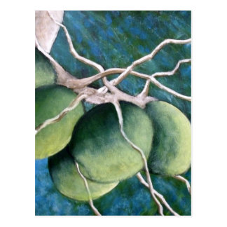 Bunch of Coconuts on The Tree Postcard