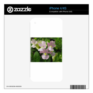 Bunch of Delicate White Blossoms Blowing The Wind iPhone 4 Skins