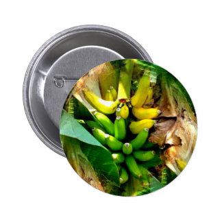 Bunch of delicious yellow and green bananas 2 inch round button